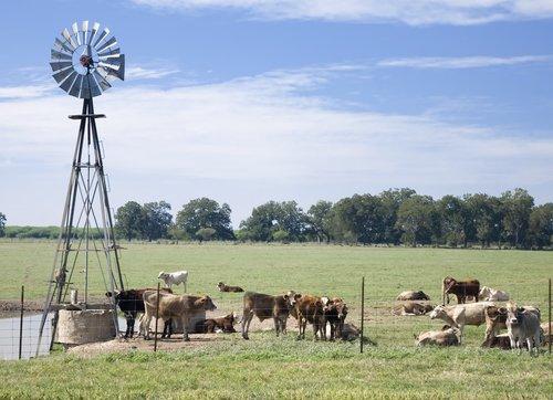 Clip Art Logo Beef Cattle Farming Cattle Mating