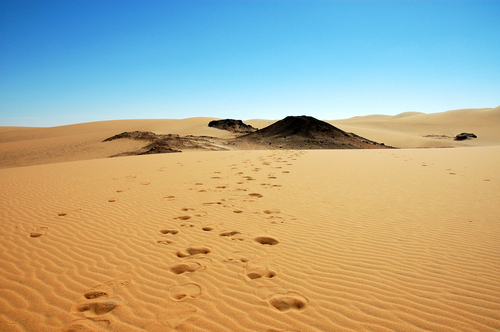 Picture of Dakhla Oasis - Camel tracks in the desert near Dakhla ...
