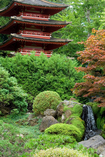 Picture Japanese Tea Garden In Golden Gate Park In San Francisco