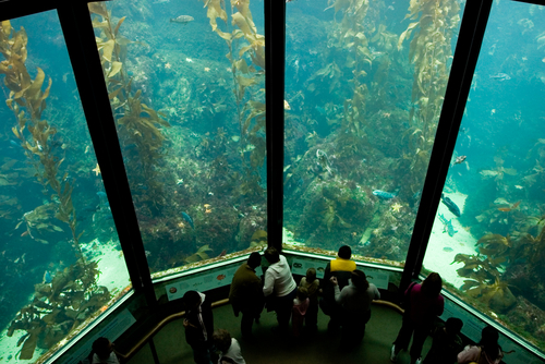 8 top tourist attractions in monterey planetware