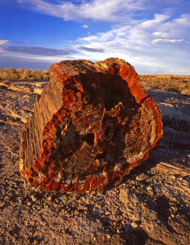 Petrified Tree in Petrified Forest National Park.