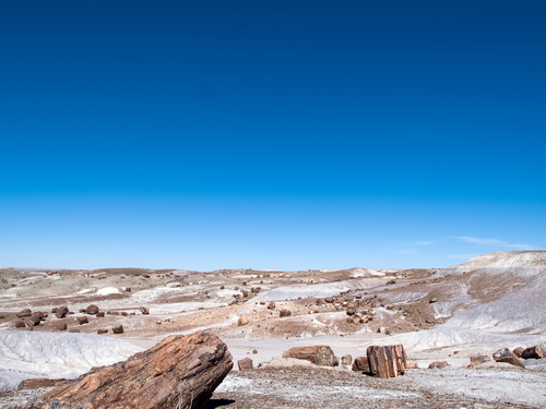 Tree shaped rocks in Petrified Forest National Park.