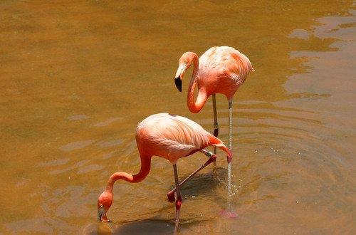 Flamingos at Sea World in San