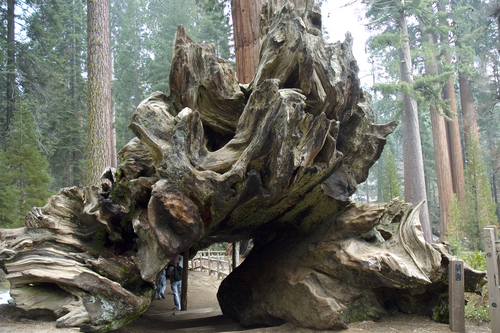 http://www.planetware.com/i/photo/sequoia-national-park-big-stump-california-ca380.jpg
