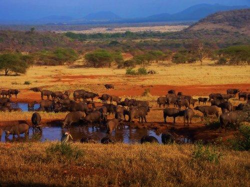 http://www.planetware.com/i/photo/serengeti-national-park-tza122.jpg