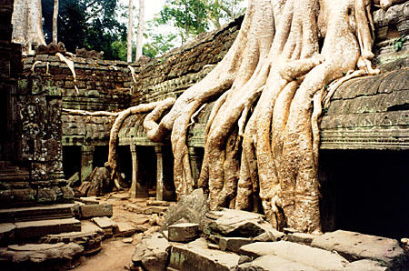 tree-roots-encompass-a-corridor-at-ta-pr