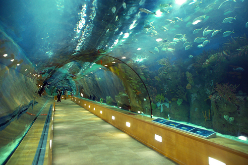 Porto Sea Life Center - Oceanario - Page 12 - SkyscraperCity