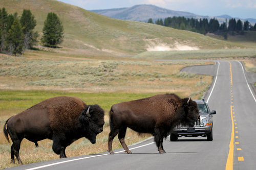 Yellowstone Park Images. Yellowstone National Park