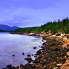 Picture - Rocky shoreline of Acadia National Park.