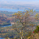 Picture - Scenic overview of fall colors in Acadia National Park.