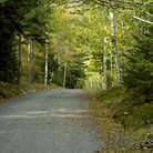 Picture - Carriage Road in Acadia National Park.