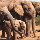 Picture - An elephant family at Addo Elephant National Park.