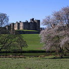Picture - Lush grounds of Alnwick Castle.