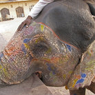 Picture - Painted elephant at the Amber Fort in Jaipur.