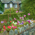 Picture - Flowers on a fence of Ambleside village.