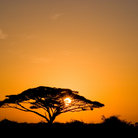 Picture - Sunrise over Amboseli National Park.