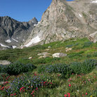 Picture - Wildlfowers in Indian Peaks Wilderness, Arapaho National Forest.