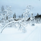 Picture - Cross country ski trail at Are.