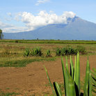 Picture - Mount Meru seen from Arusha National Park.