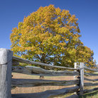 Picture - Fence and fall colors along the Blue Ridge Parkway.