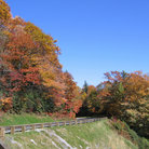 Picture - Fall colors along the Blue Ridge Parkway, North Carolina.