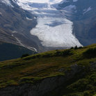 Picture - Looking over the Athabasca Glacier in summer.