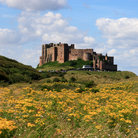 Picture - Flowers in front of Bamburgh Castle.