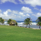 Picture - Palm trees on the beach at Bathsheba.