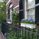 Picture - Flower boxes on a brownstone in Beacon Hill, Boston.