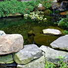 Picture - Rock pond in Beacon Hill garden, Boston.