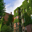 Picture - Ivy covered apartment buildings in Beacon Hill, Boston, MA.