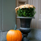 Picture - Fall display in Beacon Hill District, Boston, MA.