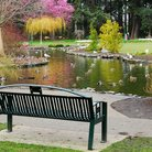 Picture - A park bench near a pond in Beacon Hill Park.