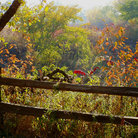 Picture - An autumn seen near at Homestead National Monument of America in Beatrcie.