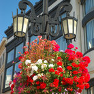 Picture - Flowers on a lamp post in Beverly Hills.