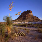 Picture - Castelon Peak in Big Bend National Park.