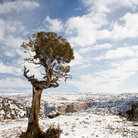 Picture - Harsh winter landscape of Bighorn Canyon.