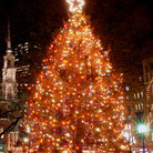 Picture - Boston's Official Christmas Tree located in the Boston Commons.
