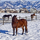 Picture - A horse ranch in winter near Bozeman.