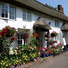 Picture - Whitewashed thatched cottages in Branscombe.