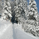 Picture - A snow covered hiking trail in Braunwald.