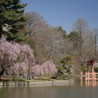 Picture - Japanese Garden at Brooklyn Botanic Garden.