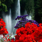 Picture - Fountains and flowers at Butchart Gardens in Victoria.
