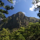 Picture - View through the pines to Caldera de Taburiente.