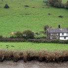 Picture - Green field and cottages in Calstock.