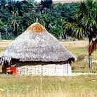 Picture - Thatched roof Indian home in La Gran Sabana in Parque Nacional Canaima (Canaima National Park).