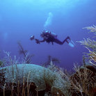 Picture - A diver in the waters off Canouan.