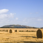 Picture - Hay bales in the fields of Canterbury in late summer.