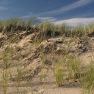 Picture - Dunes near Provincetown in the Cape Cod National Seashore, MA.