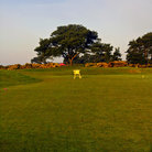 Picture - View over the Carnoustie Golf Course.
